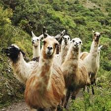 Fauna característica da Trilha Inca