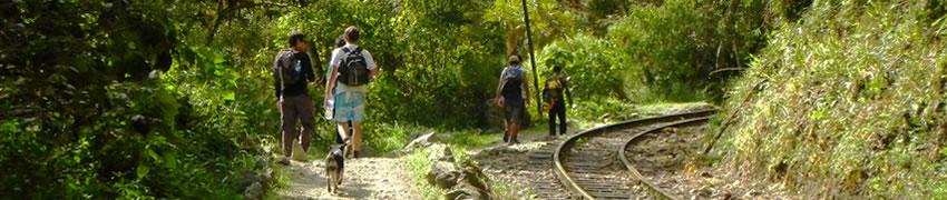 camino-inca-jungle-3-d2