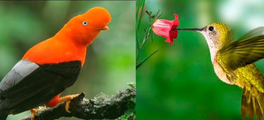 aves-biodiversidad-ic