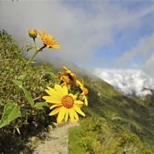Megadiversidade na trilha Inca